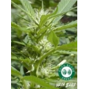 Hash Balls 2 Good House Seeds